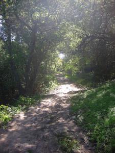 Spring Equinox Nature Hike on Cozy Dell Trail @ Cozy Dell Trail | Ojai | California | United States