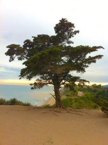 Douglas Family Preserve Herb Walk (Santa Barbara) @ Douglas Family Preserve   California   United States