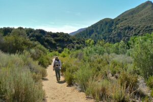 Sespe River Trail Herb Hike @ Maricopa Plaza parking lot for carpool  | Ojai | California | United States