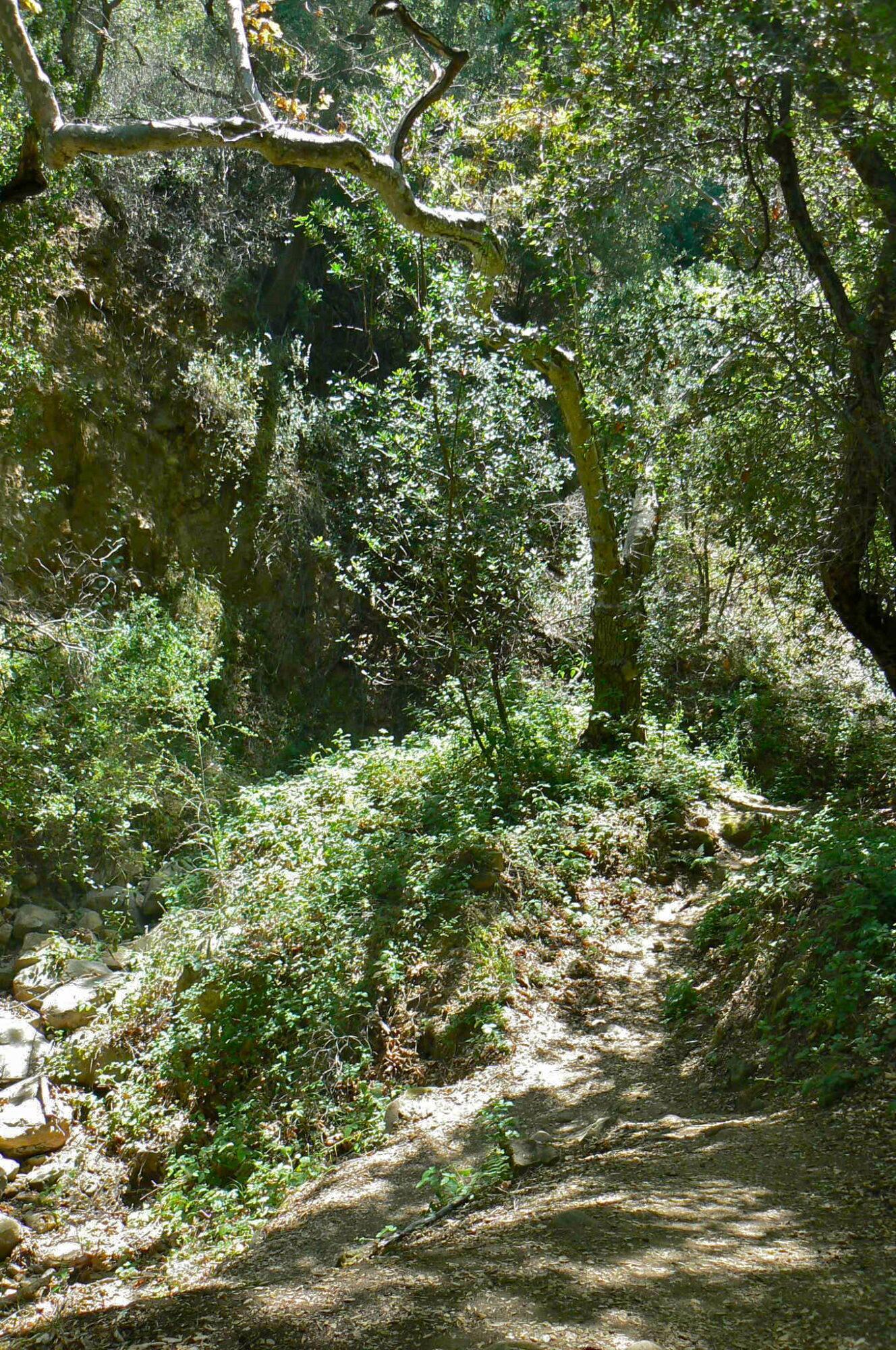Stunt High Trail Nature Hike