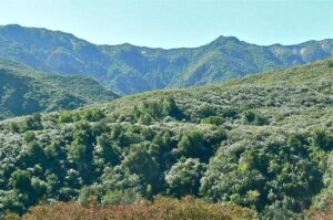 Matilija Canyon Herb Walk @ Maricopa Plaza parking lot for carpool  | Ojai | California | United States