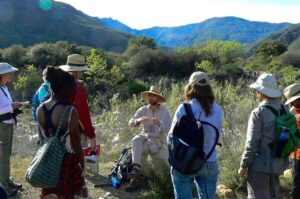 Edible and Medicinal Plants of Ventura County with Tellur Fenner @ Maricopa Plaza parking lot for carpool   | Ojai | California | United States