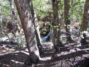 Rose Valley Creek