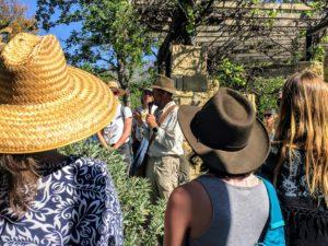 Spring Medicinal Plant Workshop with James Adams, PhD, of USC School of Pharmacy @ Meet at unmarked parking lot