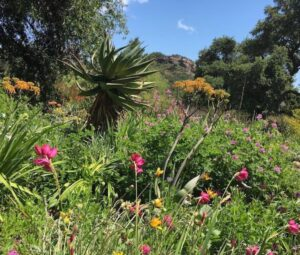 Herb Walk at Taft Gardens & Nature Preserve @ Meet for carpool to Taft Gardens & Nature Preserve | Ojai | California | United States