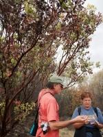 Lanny examining unhealthy Manzanita (Arctostaphylos spp)