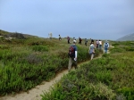 Seaside Herb Walk with Lanny Kaufer