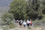 On a nature hike with Lanny Kaufer(www.HerbWalks.com)